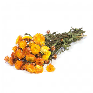 Fleurs Séchées Helichrysum Orange