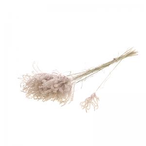 10 Fleurs Séchées Mini Pampas Roses